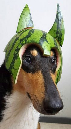 Dogs In Watermelon Helmets