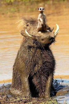 Funny animals – Humoros állatok