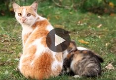 Super hero cats protecting and defending compilation 2015