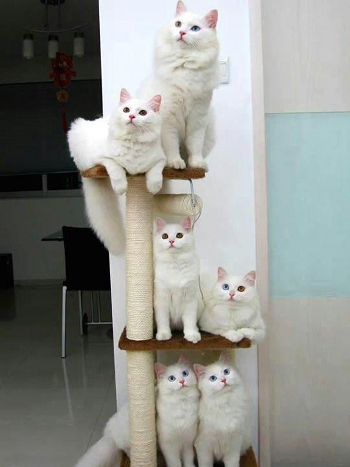 Unusually obedient cats