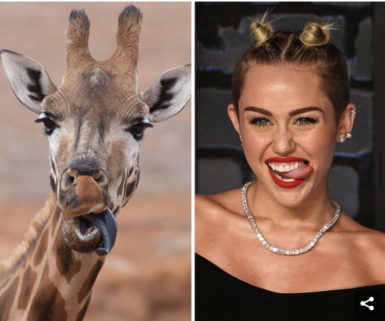 Celebrity versus animals