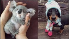 Cute Baby Animals Videos