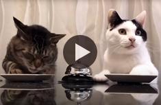 Cats Ringing for Dinner