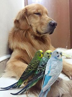 The World's Most Unusual Best Friends
